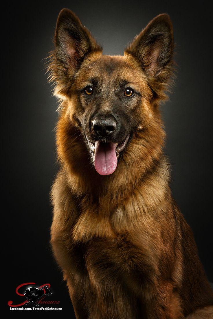 die besten 17 ideen zu harzer fuchs auf pinterest h ndchen training fuchshund und fuchs haustier. Black Bedroom Furniture Sets. Home Design Ideas