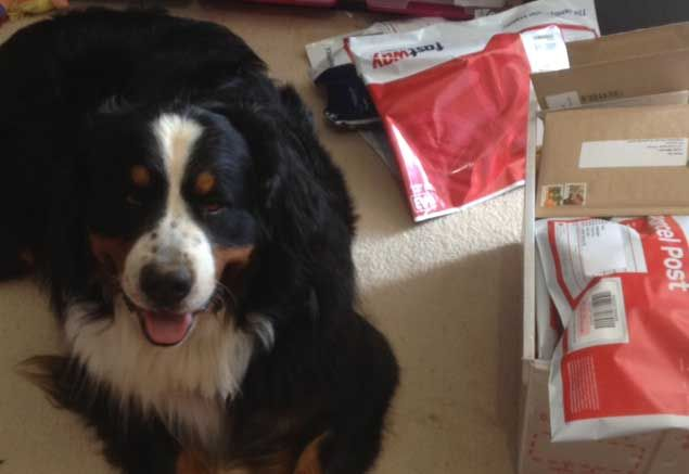 Izzy the Bernese Mountain Dog often pops in during school holidays