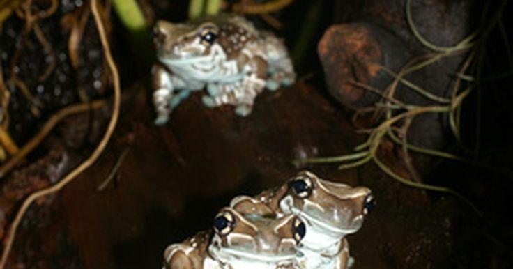 Plantas ameaçadas na floresta amazônica. Estima-se que 80 por cento das plantas com flores verdes estão na floresta amazônica. Cerca de 1.500 espécies de plantas mais altas (samambaias e coníferas) e 750 tipos de árvores podem ser encontradas em 10 mil hectares de floresta amazônica. Não se sabe exatamente quantas plantas da floresta amazônica estão ameaçadas mas é seguro dizer que ...