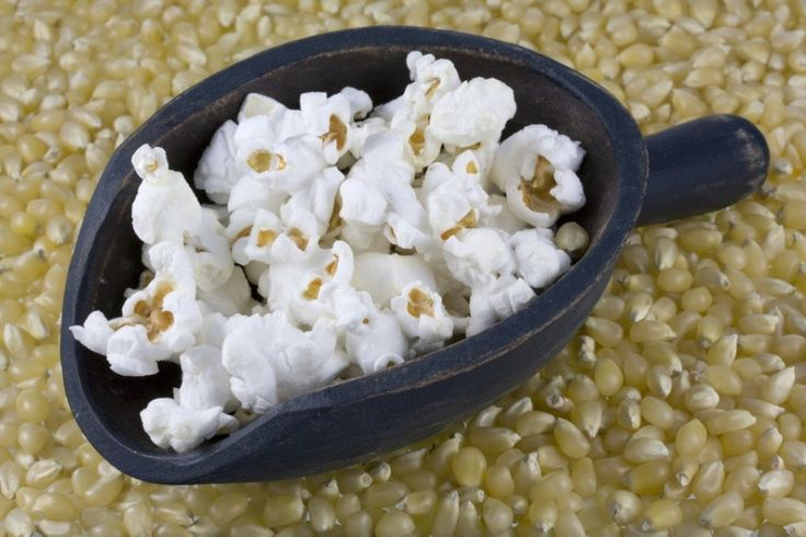 Organic Popcorn Seeds - 'Japanese Hulless White'-open-pollinated.Kernels are pure white, very tender, nutty flavor when popped.