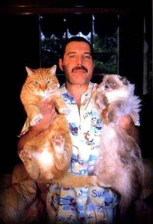 Freddie Mercury and his fat cats.