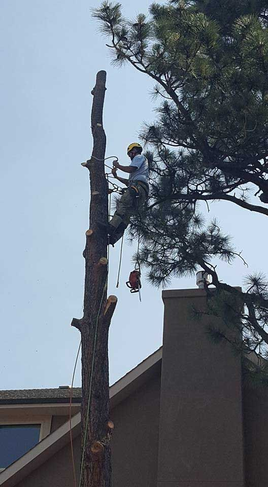 How did this tree cutter get up there?