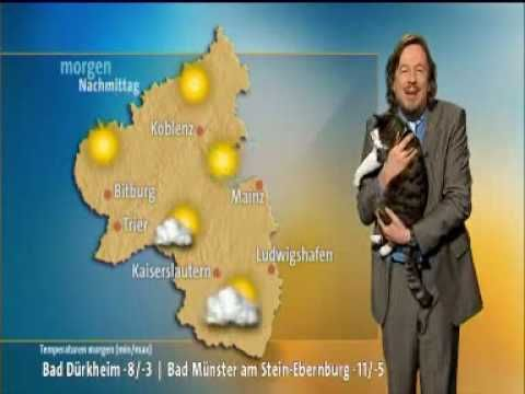 """Cat interrupts German weather broadcast and demands cuddle. """"Hey… You're not doing anything important, right? Cuz I need some cuddles. Like right meow."""" Via I HAVE CAT"""