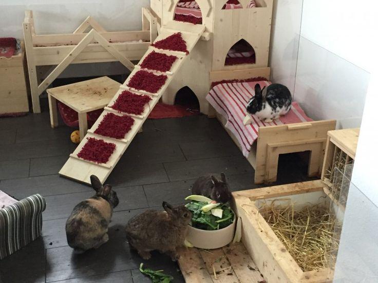 Die besten 25 kaninchen vergesellschaften ideen auf for Billige einrichtung