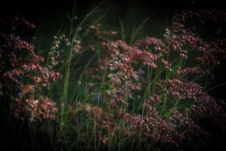 Beauty in Weeds