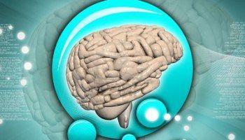 Hemisferio derecho e izquierdo del cerebro – Procesar la información