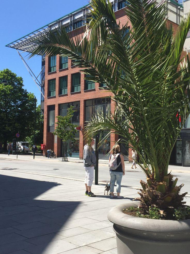 bildesøk google Kristiansand