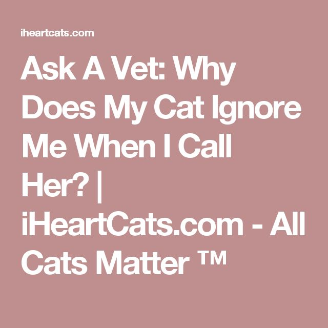 Ask A Vet: Why Does My Cat Ignore Me When I Call Her? | iHeartCats.com - All Cats Matter ™