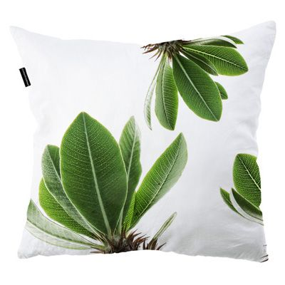 Scatter cushions   Indoor   clintonfriedman   collections