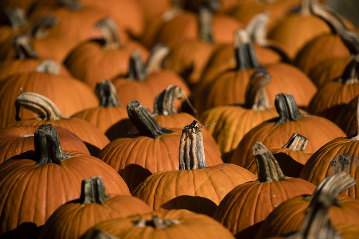 Pumpkins are set out for sale at Maple Acres Farm in Plymouth Meeting, Pennsylvania, October 2017.