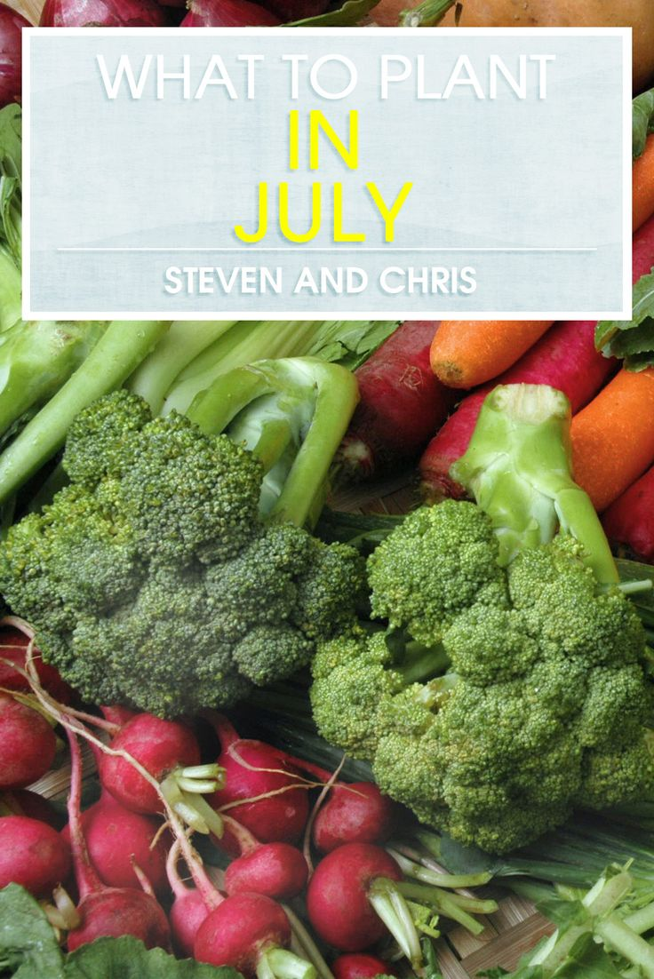 It's not too late to start your vegetable garden in July!