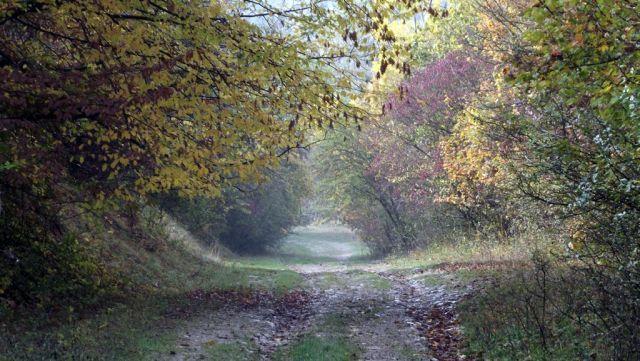 Padurea Hoia-Baciu - Romania