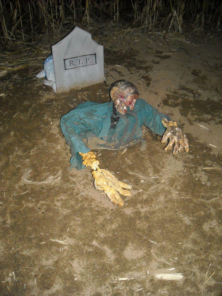 haunted corn maze