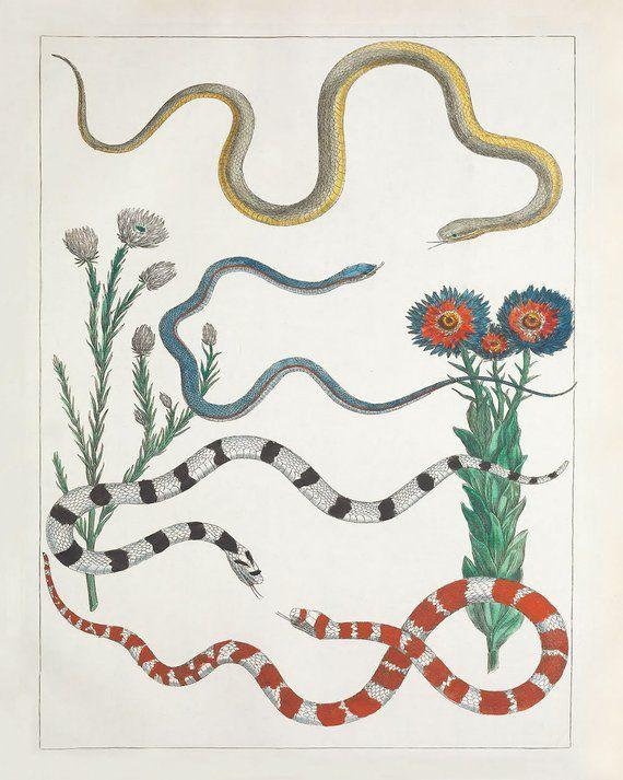 Desert Wall Art Southwest Decor With Snakes And Desert Botanical Flowers In 2021 Art Vintage Illustration Art Fine Art Giclee Prints
