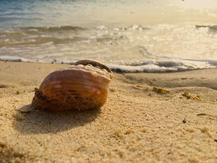 Beach shell photography waves sand background