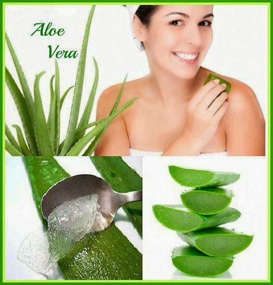 GNLD GOLDEN products NEOLIFE                          FRANCESCA MODUGNO distributor: ALOE VERA PLUS GNLD NEOLIFE  ALOE VERA  =  ELISIR ...