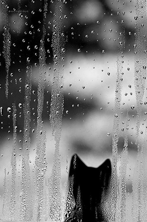 Black cat silhouette through a rainy window