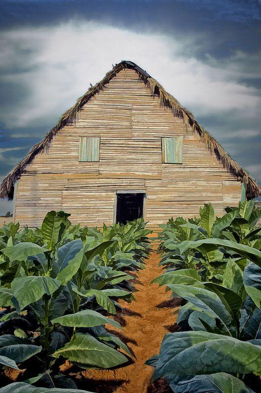 Tobacco Barn, Viñales, Pinar del Rio, Cuba #cuba [ FGarciaFoods.com ]