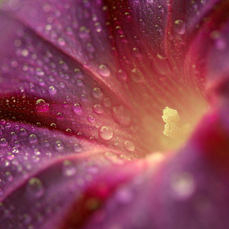 118 best phoenix az images on pinterest phoenix arizona