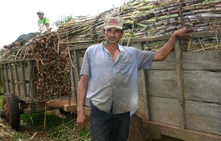 Abtransport des Zuckerrohrs vom Feld, Manduvira, Paraguay