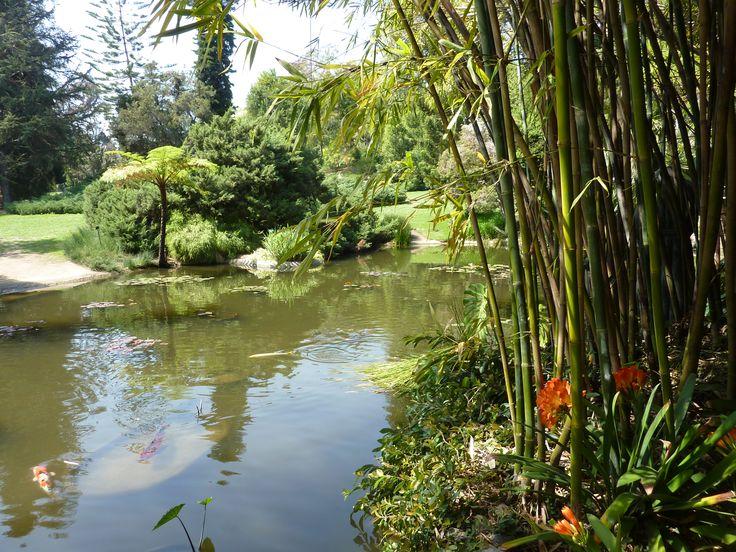 Huntington Library, Botanical Gardens & Museum, California. copyright Jacqueline Auvigne