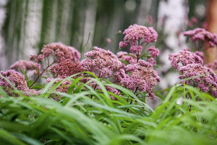 Формы цветников и их роль в создании композиции сада   Цветники   Журнал «Дом и сад»