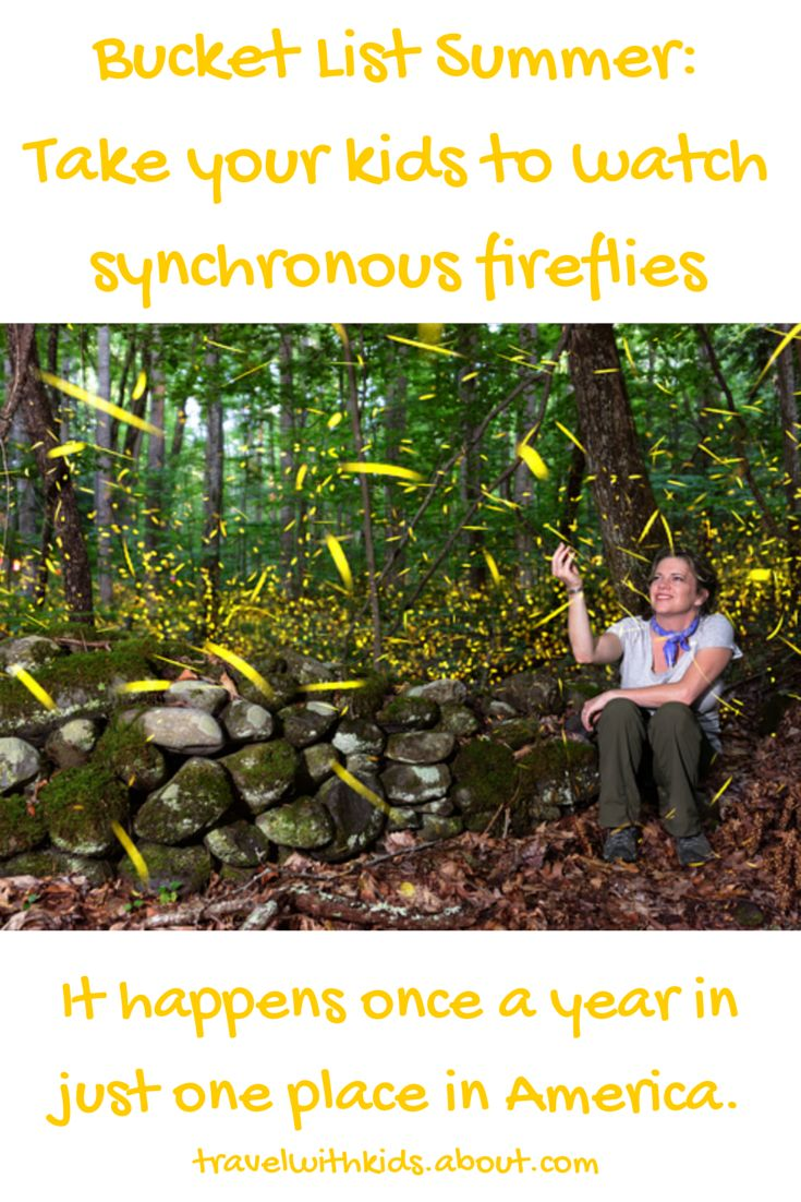 For a few weeks every June, the synchronous fireflies of Great Smoky Mountains National Park put on one helluva show.
