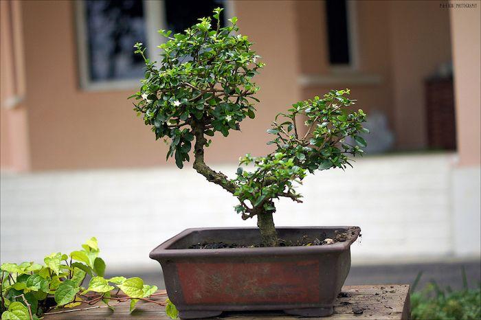 Vous venez d'acquérir un bo   nsai ou en recevoir un en cadeau et vous ne savez pas comment vous en occuper ? Voici les conseils indispensables pour bien s'occuper d'un bonsai. Qu'est-ce qu'un bonsai ? Un bonsaï est un arbre, du…