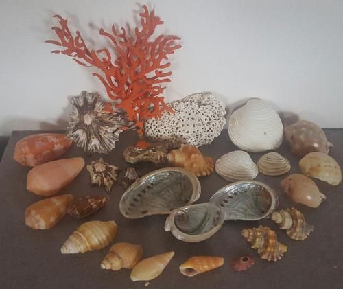 Buy Sea Shells & rare redsea grass from Jeffreys Bay (cleaned handpicked) beach, driftwood, fish aqarium for R45.00