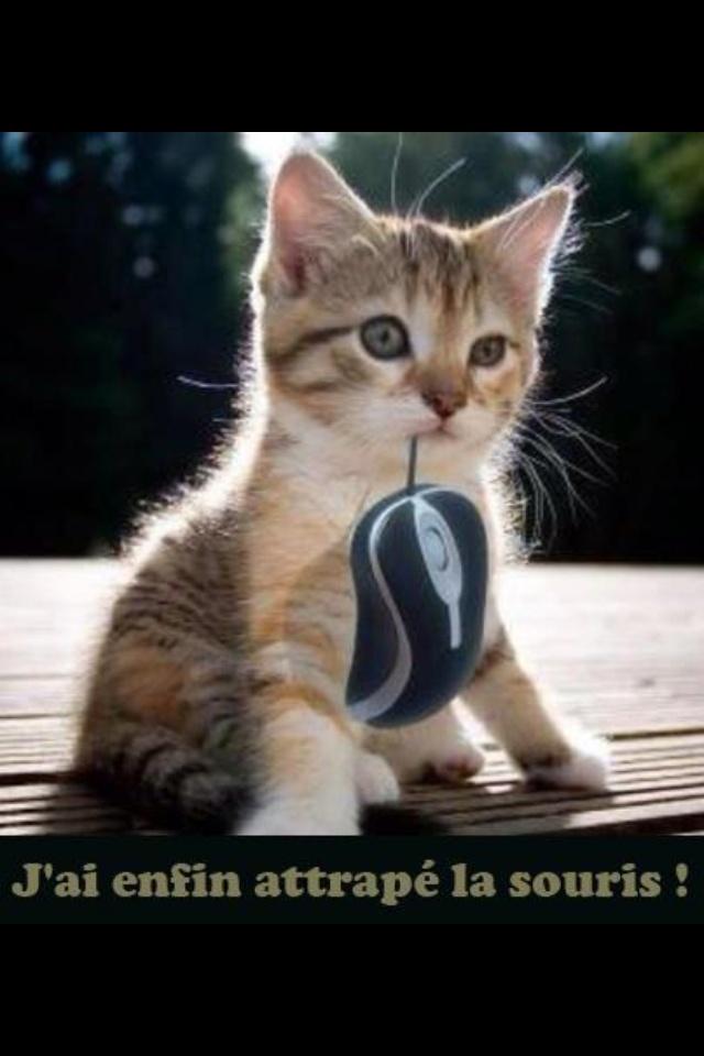 J'ai attraper une  souris..................................  mais d'ordinateur.