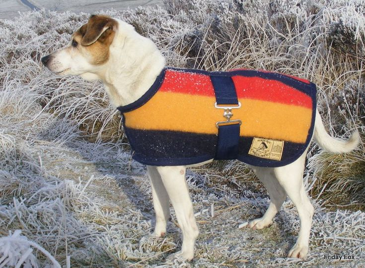 Horse Blanket Style Dog Coats For Small Breeds