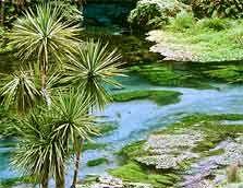 Blue Spring, Waihou River.