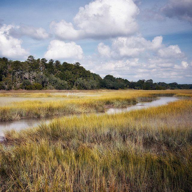 Salt Marsh | salt marsh | | Flickr - Photo Sharing!