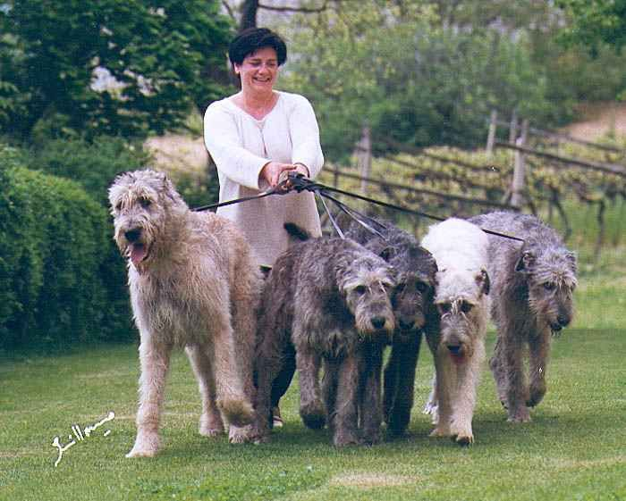 """Irish wolfhounds :} @Kyla: """"Did you know they're the biggest breed of dog? They can stand up to 7 feet tall on their hind legs."""" Katie: """"Oh, my goodness! I want one to hug and dance with!"""""""