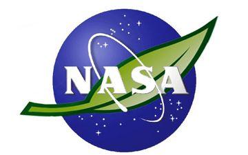 Havayı temizlemede NASA'dan en yüksek puanları alan 7 ev bitkisi