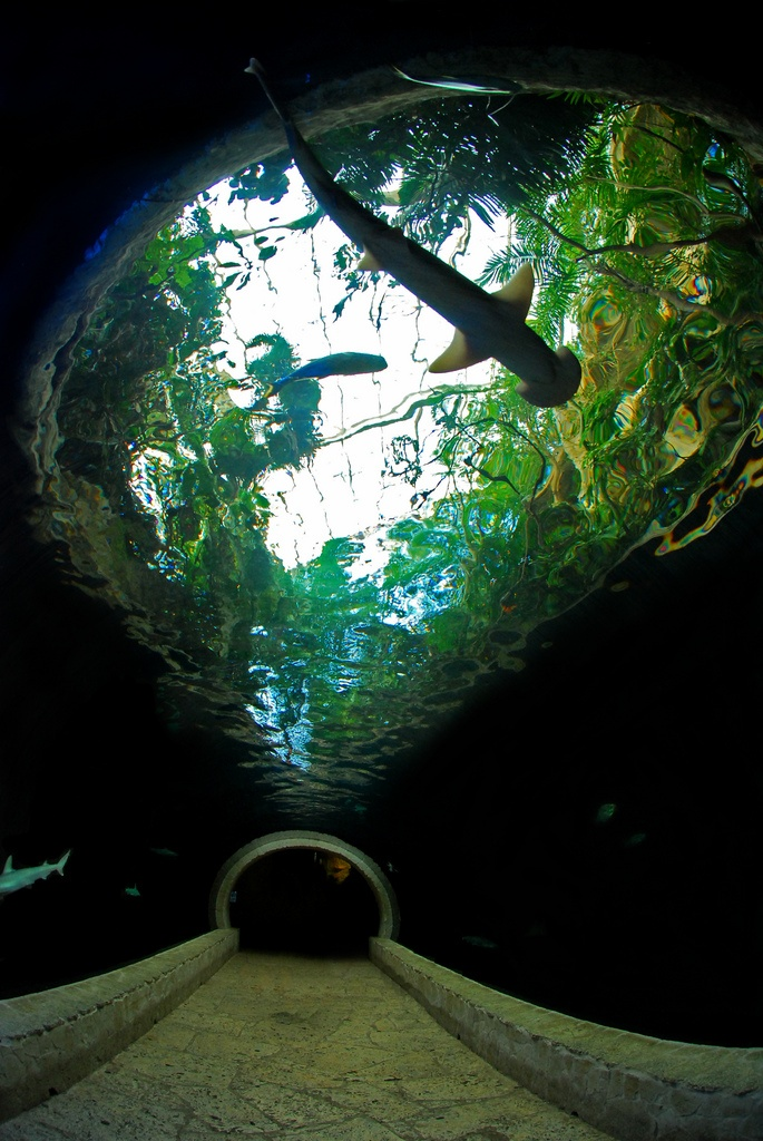 Dalllas World Aquarium, Dallas, Texas (Used to live here.)
