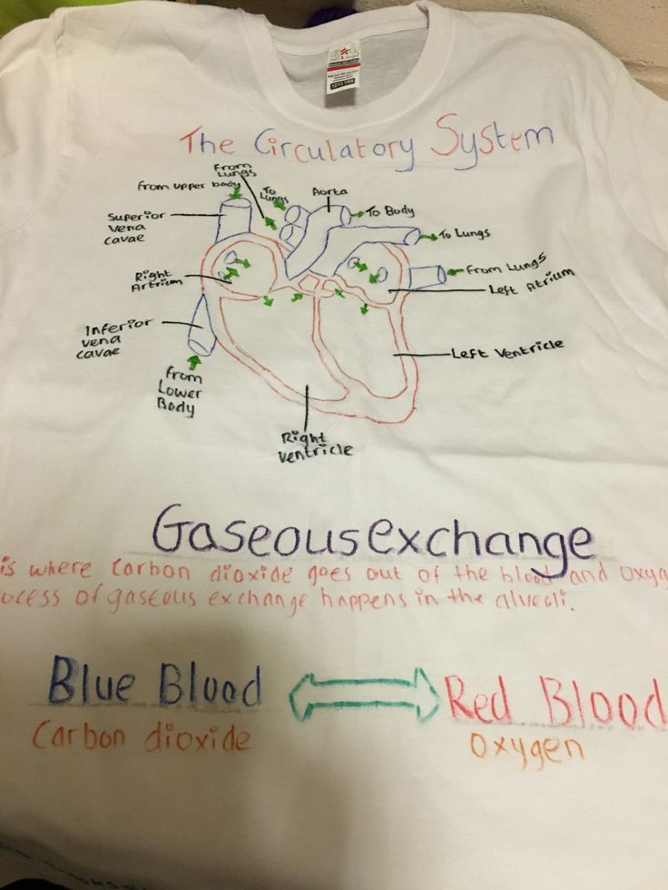 T-shirt making with year 10 GCSE PE class. Students focuses on the cardiovascular and respiratory system. Went down really well!