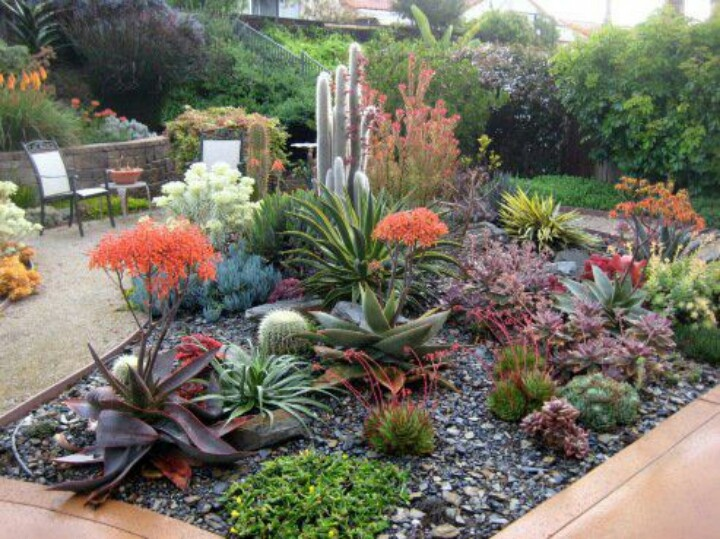 Beautiful succulent bed!