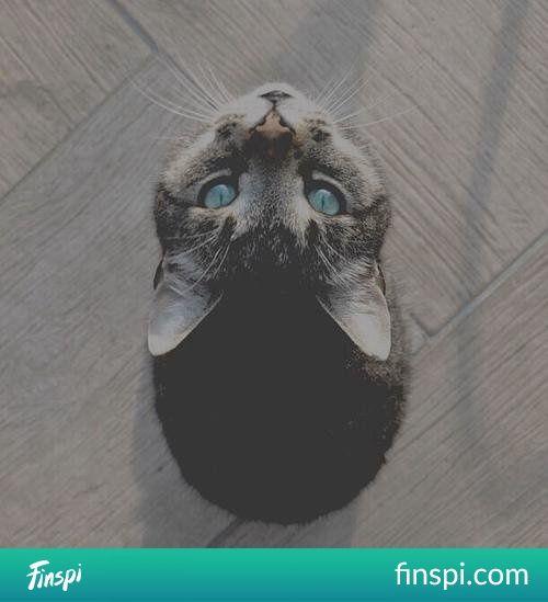 miałłł.... #kot #sweet #kotek #photo