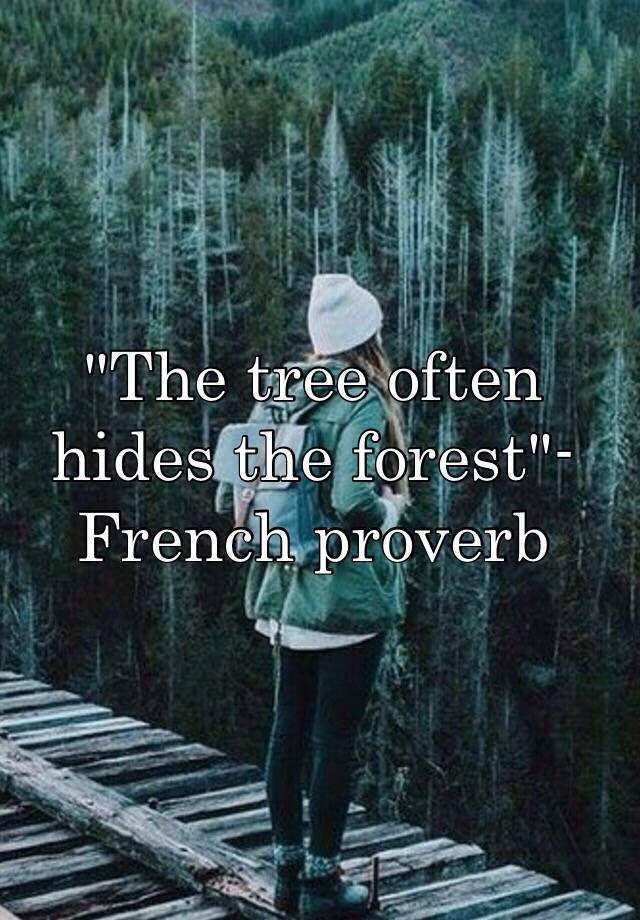 """""""The tree often hides the forest""""-French proverb"""