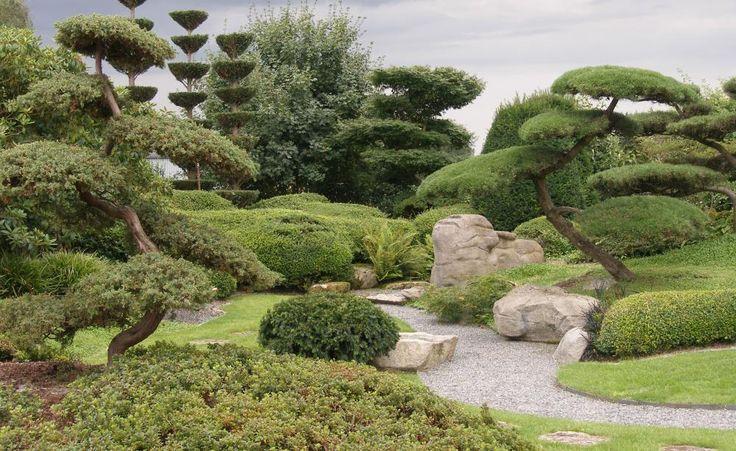 Die perfekte asiatische Gartenlandschaft: ein sanft hügeliges Beet mit malerischen Formgehölzen