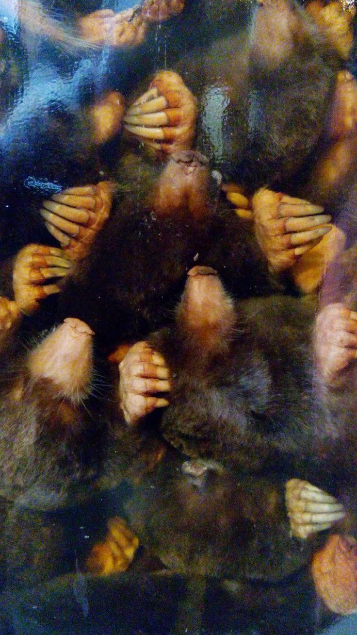 earlybirder: A Jar of Moles, a Micrarium, a Neanderthal and wha...