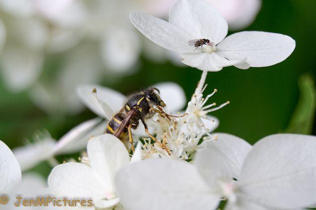 Macro picture made in the models garden Harry Boerhof in Dwingeloo (Netherlands)  #flowers #Macro #Bloemen #Flora