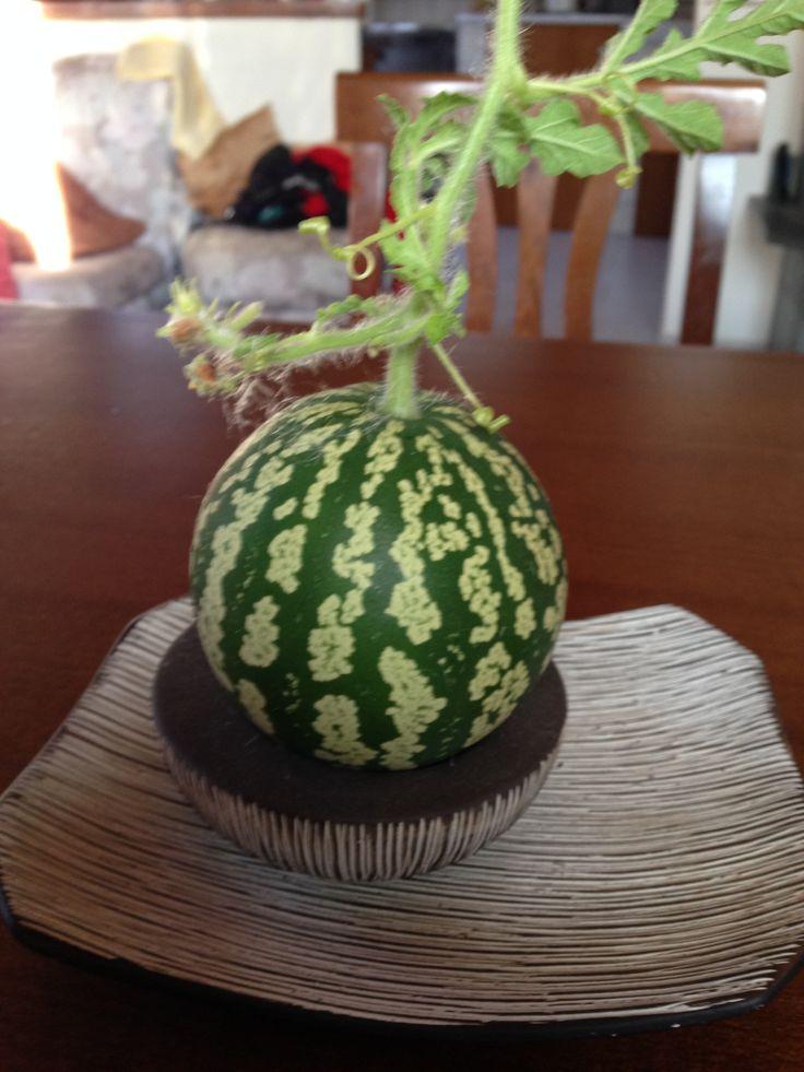 la mia prima zucca coltivata