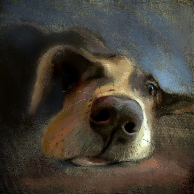 Jeremy Norton Illustration - Let Sleeping Dogs Lie