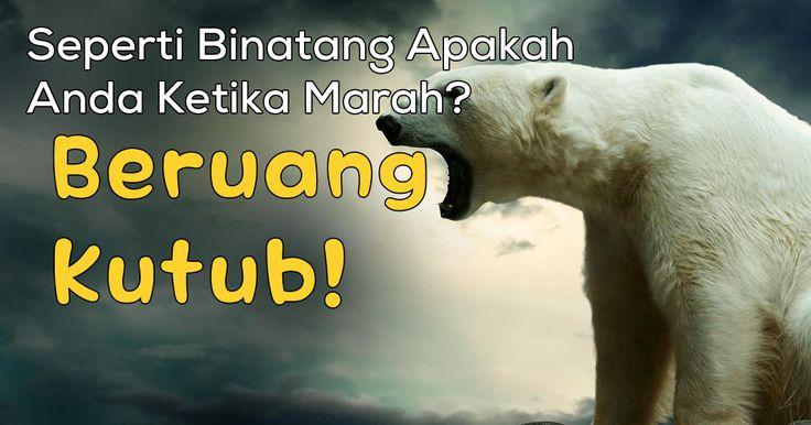 Binatang Apakah Anda Ketika Anda Marah? - Beruang Kutub