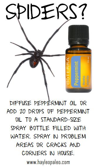 17 Best Images About Oils On Pinterest Diffusers Bug