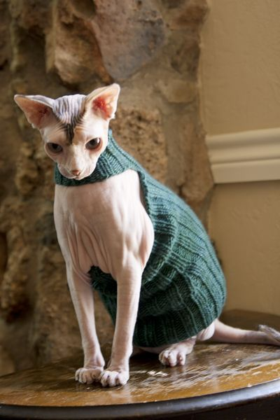 sphynx sweater knitting pattern Do I know anyone who can