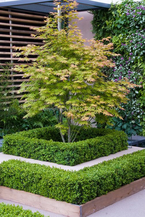 Japanese maple tree in garden garden styles pinterest for Garden design with japanese maple