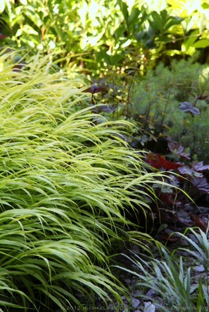17 best images about grasses on pinterest gardens for Can ornamental grasses grow in shade